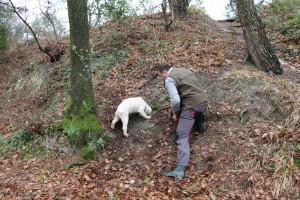 ricerca del tartufo con cane lagotto